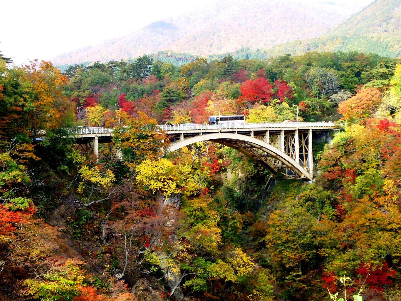 【ヒルナンデス】この秋行きたい紅葉『絶景ベスト5』