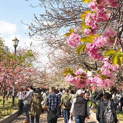 【ヒルナンデス】絶景スポット『桜の名所』ベスト7